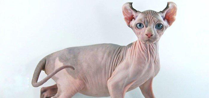 Gato Murcielago